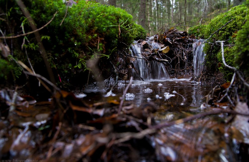 Andas några kilometer skog