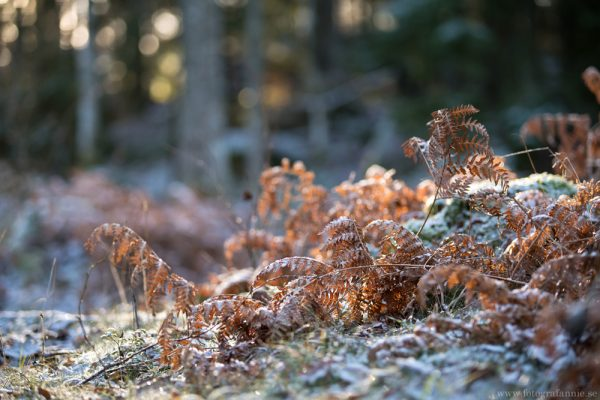 Frostbitet Tinnerö