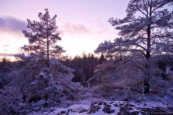 När snön kom till Stockholm