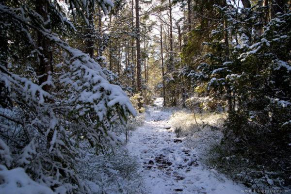 Snö i Paradiset