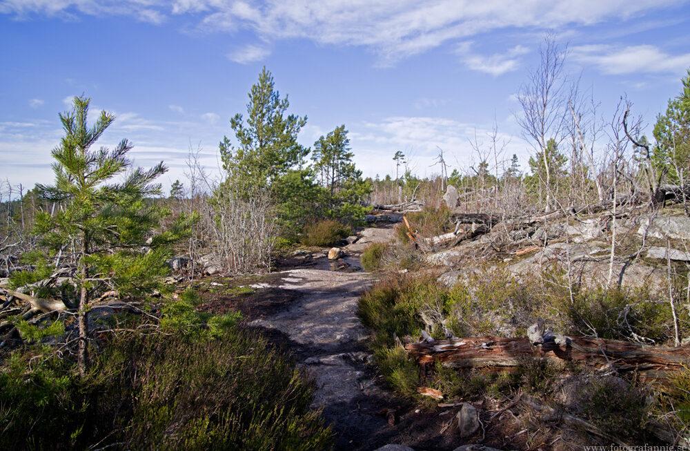 Utelunch vid Stensjön